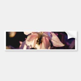 20150513 Akelei Bumper Sticker