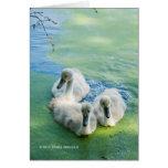 3 Cygnets in Algae Greeting Card