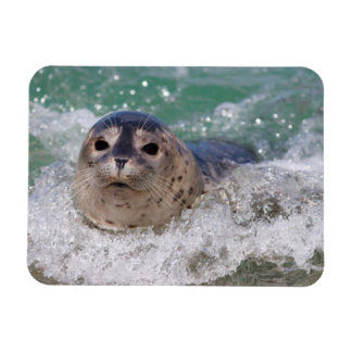 A baby seal surfing rectangular photo magnet