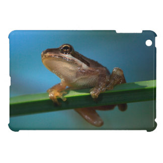 A Baby Tree Frog Cover For The iPad Mini