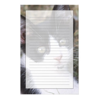 A black and white cat kitten in the garden. stationery