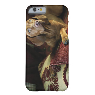 A dog lying on pillows. barely there iPhone 6 case