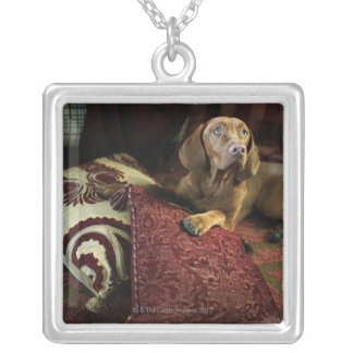 A dog lying on pillows. square pendant necklace