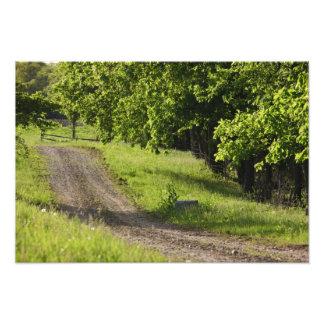 A farm road in Ipswich, Massachusetts. Photo Art