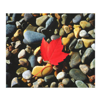 A Maple leaf on a Rock Background Gallery Wrapped Canvas