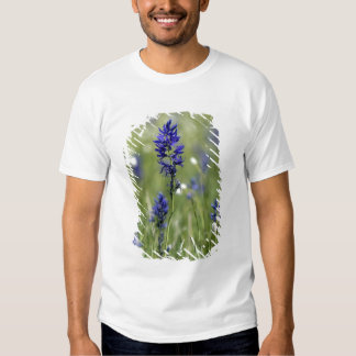 A mountain meadow of wildflowers including t shirts