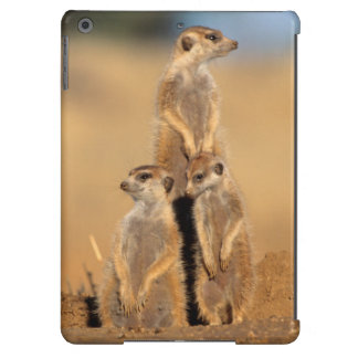 A trio of Suricates sunning at their den iPad Air Cover