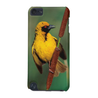 A Village Weaver calling while perched on a reed iPod Touch (5th Generation) Cover