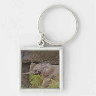Africa, Kenya wildlife, baby elephant. Silver-Colored Square Key Ring