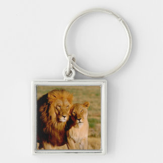 Africa, Namibia, Okonjima. Lion & lioness Silver-Colored Square Key Ring