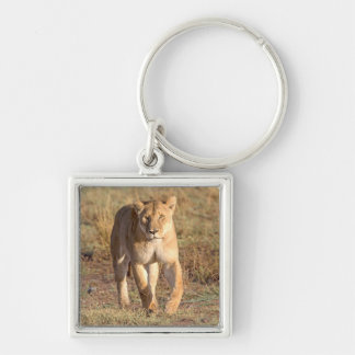 Africa, Tanzania, Serengeti. Lion And Lioness Silver-Colored Square Key Ring