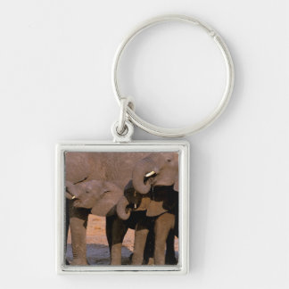 Africa, Tanzania, Tarangire National Park. Silver-Colored Square Key Ring