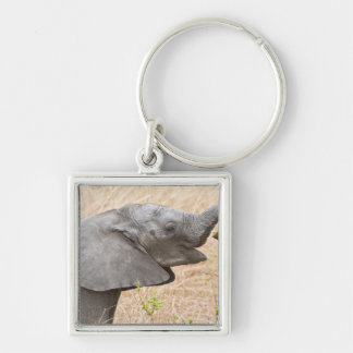 Africa. Tanzania. Young Elephant at Tarangire Silver-Colored Square Key Ring
