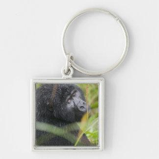 Africa, Uganda, Bwindi Impenetrable National 2 Silver-Colored Square Key Ring