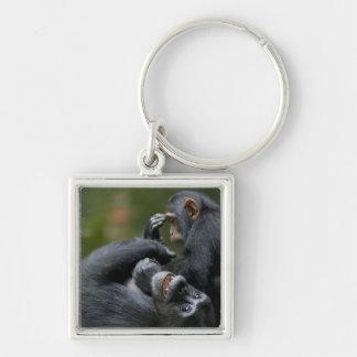 Africa, Uganda, Kibale Forest Reserve, Juvenile 2 Silver-Colored Square Key Ring