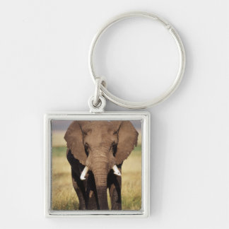 African Bush Elephant Silver-Colored Square Key Ring
