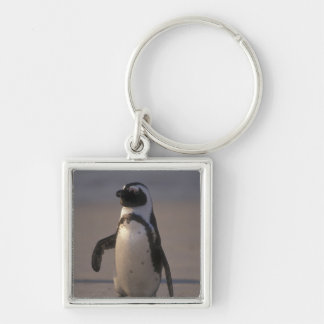 African Penguin (Spheniscus demersus) or Jackass Silver-Colored Square Key Ring