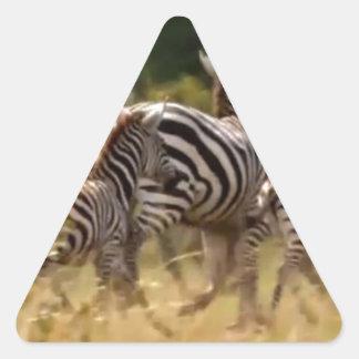 African Zebra cool stuff Triangle Sticker