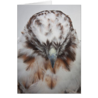 Albino Red-tailed Hawk Note Card