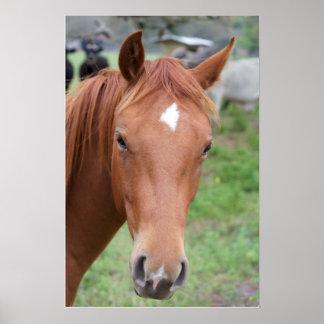 Alert Brown Horse Close-up Poster