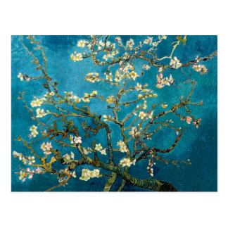 Almond Branches in Bloom Post Card