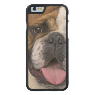 An english bulldog in Belgium Carved® Maple iPhone 6 Slim Case