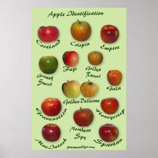 Apple Identification Poster