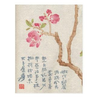 Asian Cherry Blossom Vintage Postcard