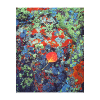 Aspen leaf on a lichen covered rock stretched canvas print
