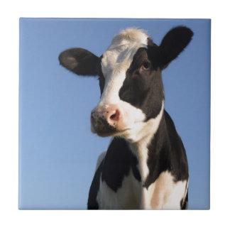 Attentive cow small square tile