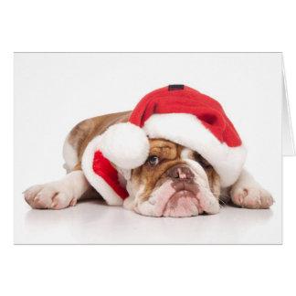 Aussie Bulldog Christmas Card