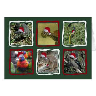 Australian Christmas Animals Note Card