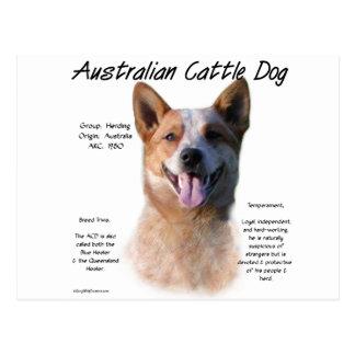 AustralianCattle Dog (redspec) History Design Postcard