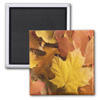 Autumn Fall Collection Golden Leaves Fridge Magnet