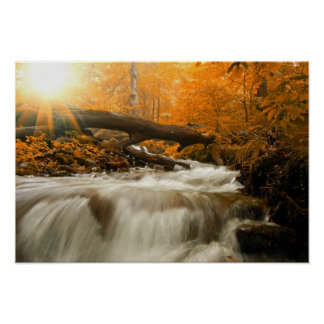 Autumn landscape with trees, river and sun poster