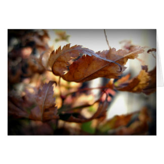 Autumn Leaf Note Card (Photography)