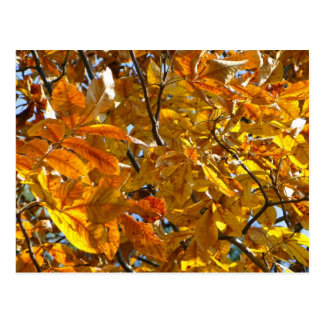 Autumn Leaves Gold Gifts Apparel Collectibles Postcard