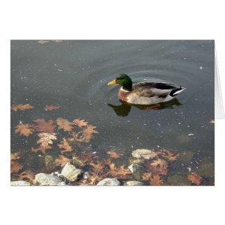 Autumn Mallard postage Greeting Card