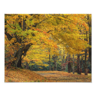 Autumn maple tree overhanging country lane, art photo