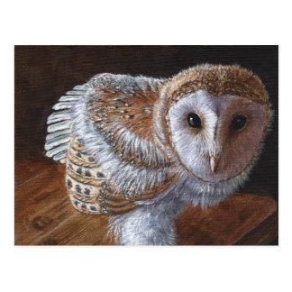Baby Barn Owl Bird Postcard