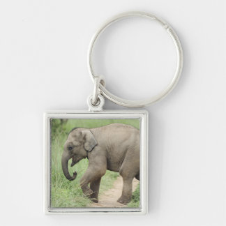 Baby Elephant following the mother,Corbett Silver-Colored Square Key Ring
