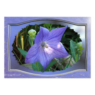 Balloon Flower w/frame ~ ATC card Pack Of Chubby Business Cards