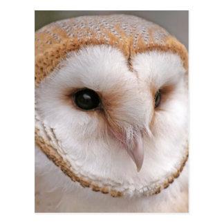 Barn Owl Portrait Postcard