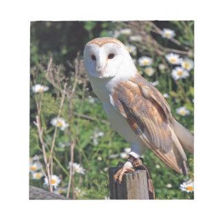 Beautiful barn owl memo note pads