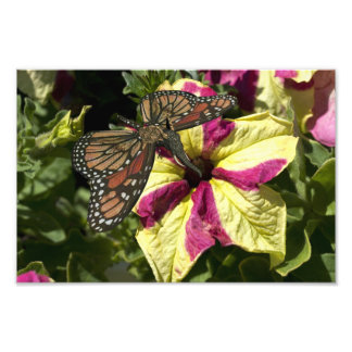 Beautiful Elephant Butterfly Photographic Print