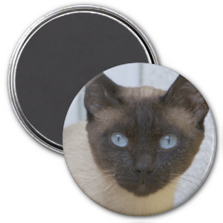 Beautiful Seal Point Siamese Cat 7.5 Cm Round Magnet