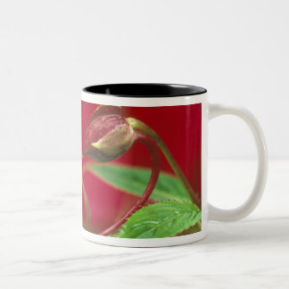 Begonia Buds in heart shape with drops . Credit Two-Tone Mug