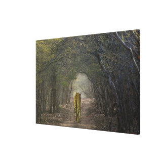 Bengal Tiger in the forest in Ranthambore Stretched Canvas Print