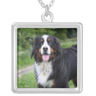 Bernese Mountain dog necklace,  gift idea Square Pendant Necklace