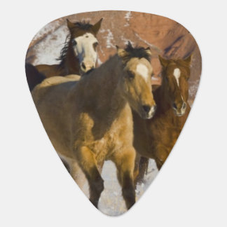 Big Horn Mountains, Horses running in the snow 3 Plectrum